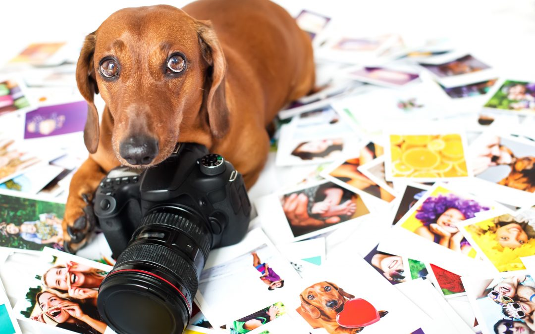 What Makes For a Great Business Photo